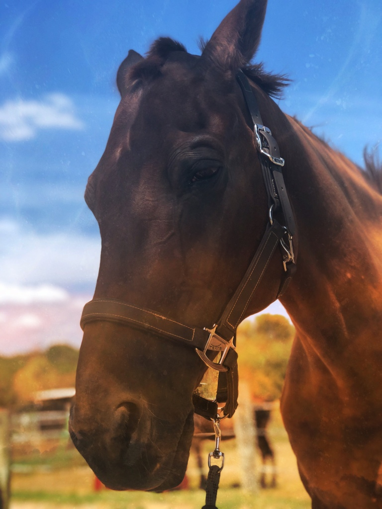 Photo of horse client that Sin Mariani provided energetic healing and channeled guidance for.
